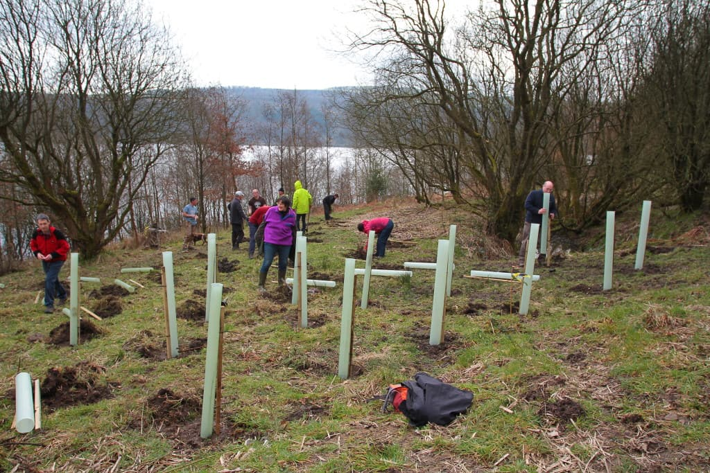 Green Building Store tree planting Trees for Yorkshire 2016